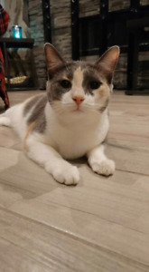 Female Cat To Give Away