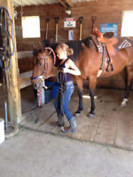 1/2 day Horse Riding Camps - certified trainer