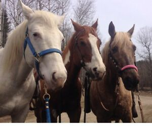 APHA Filly Docs White Angel