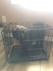 Crate for small toy sized dog or puppy
