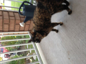 Found female cat Bowmanville