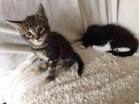 Leader kitten! Tabby male. N13. North Lodnon. Wood Green.