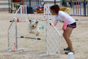 Dog Obedience and Agility