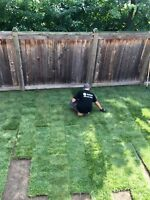 Sod Installation, Yard Clean Ups, Weed Removal and More