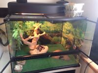 Vivarium with lovely lizard gecko! :)