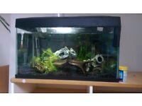 FRF-585 Fish Tank 54L