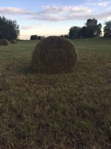 Hay for sale- rounds and squares
