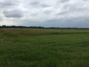 Real Estate Auction: 62 +/- Acres Saturday Sept 2nd - 12 noon