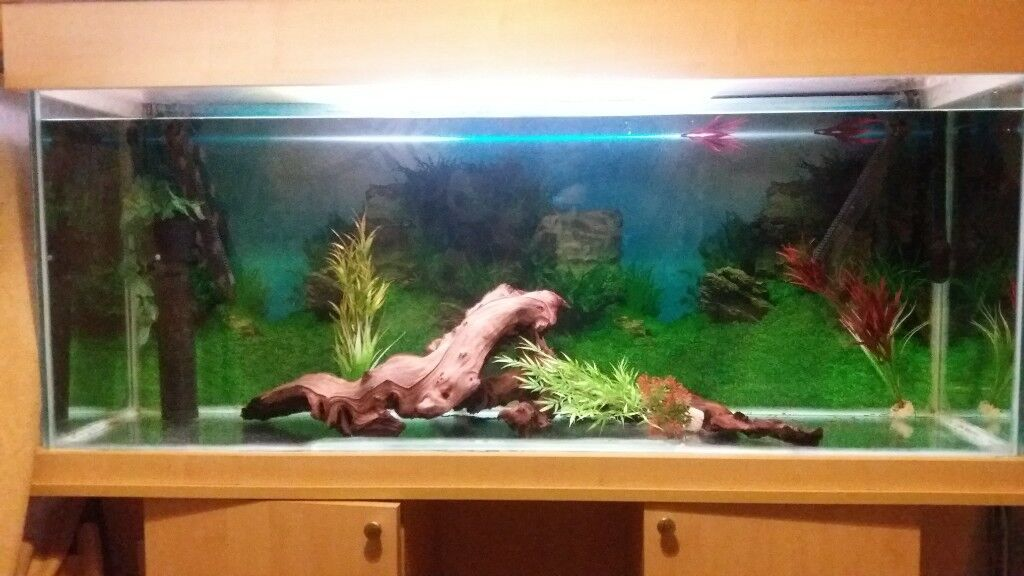 5ft fish tank set up for sale