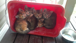 4 Playful Kittens For Sale