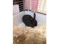 rabbit bunny for sale