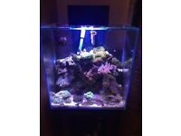 Fluval Edge 46ltr Tank & Stand With Upgraded Light System Corals Critters Inc £400 or Nearest Offer