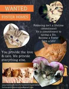 Cat foster homes