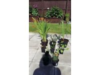 10 x Mixed Hardy Garden Plants in Pots + 5 Extra Plants FREE - £20 - Glenrothes