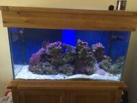 Aqua Oak Marine Aquarium 300 litre.