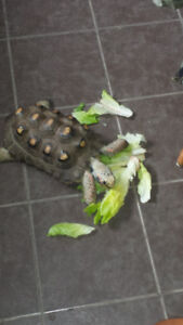 Birthday parties with reptiles fun and interactive