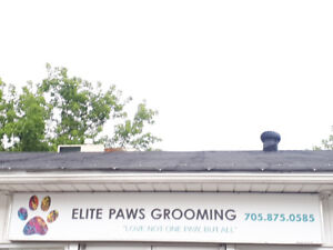 CAT and DOG GROOMING
