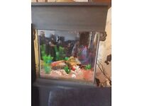 beautiful tropical fish tank 18x18 complete with everything and coloured changing light