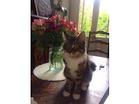 CAT MISSING!