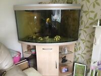 Tropical fish tank, bow fronted with stand