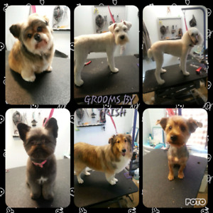 Dog groomer with 13 years experience!