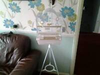 For sale, canary and cage