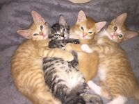 4 little kittens