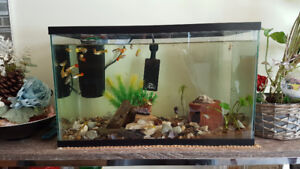 Exotic Guppies, Shrimp and Snail Tank for Sale!