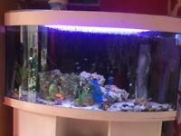 Juwel 260 litre bow front fish tank