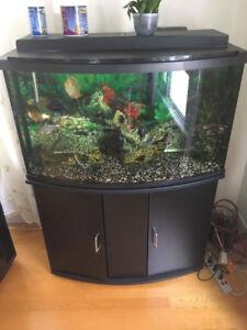 Aquarium de 45 gallons