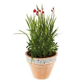 2 terracotta planters/pots with mozaic. 37cm diameter. NEW