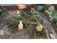 FREE Conifer branches FREE
