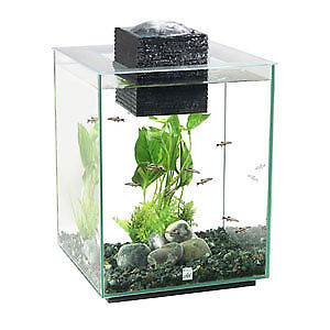 Stylish Fish tank with equipment and fish- 110$