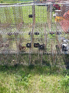 Cages for Small Animals, Chickens