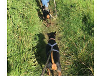 Needed: dog sitter/walker