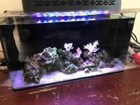 Marine fish tank & extras