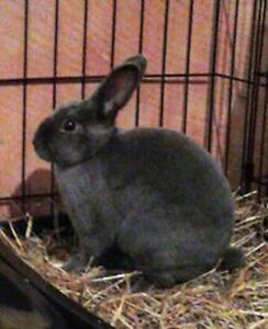 Bunnies for Adoption - 10,000 Carrots Rabbit Rescue -  Fiver