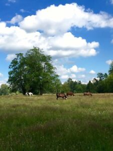 Looking for horse pasture near or around  okanagon