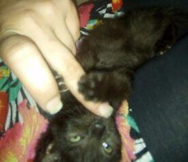 2 kittens left needing homes