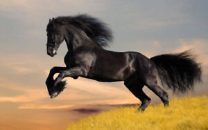RIDE/EXERCISE YOUR HORSES