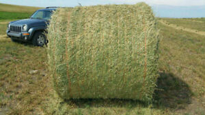 Hay For Sale (8 cents per pound)