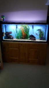 Fish Room Contents for Sale