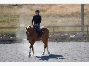 Horses for Lease in Metchosin, BC