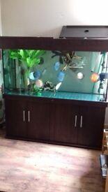 URGENT sale 5FT fish tank