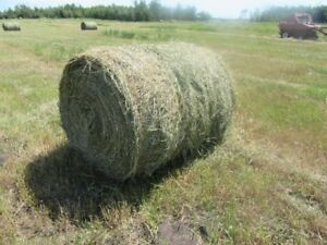 Good Horse Hay