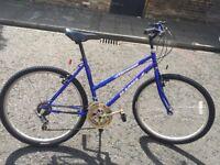 Ladies Bike - Adult
