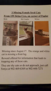 3 missing female cats in Cole Harbour