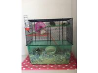 young gerbils FREE to a forever home!