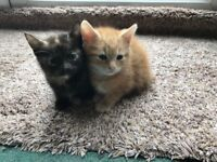 8 Gorgeous cuddly kittens, weaned, litter trained and ready for their new forever homes