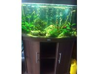 Juwel 3ft bow fronted fish tank with fish